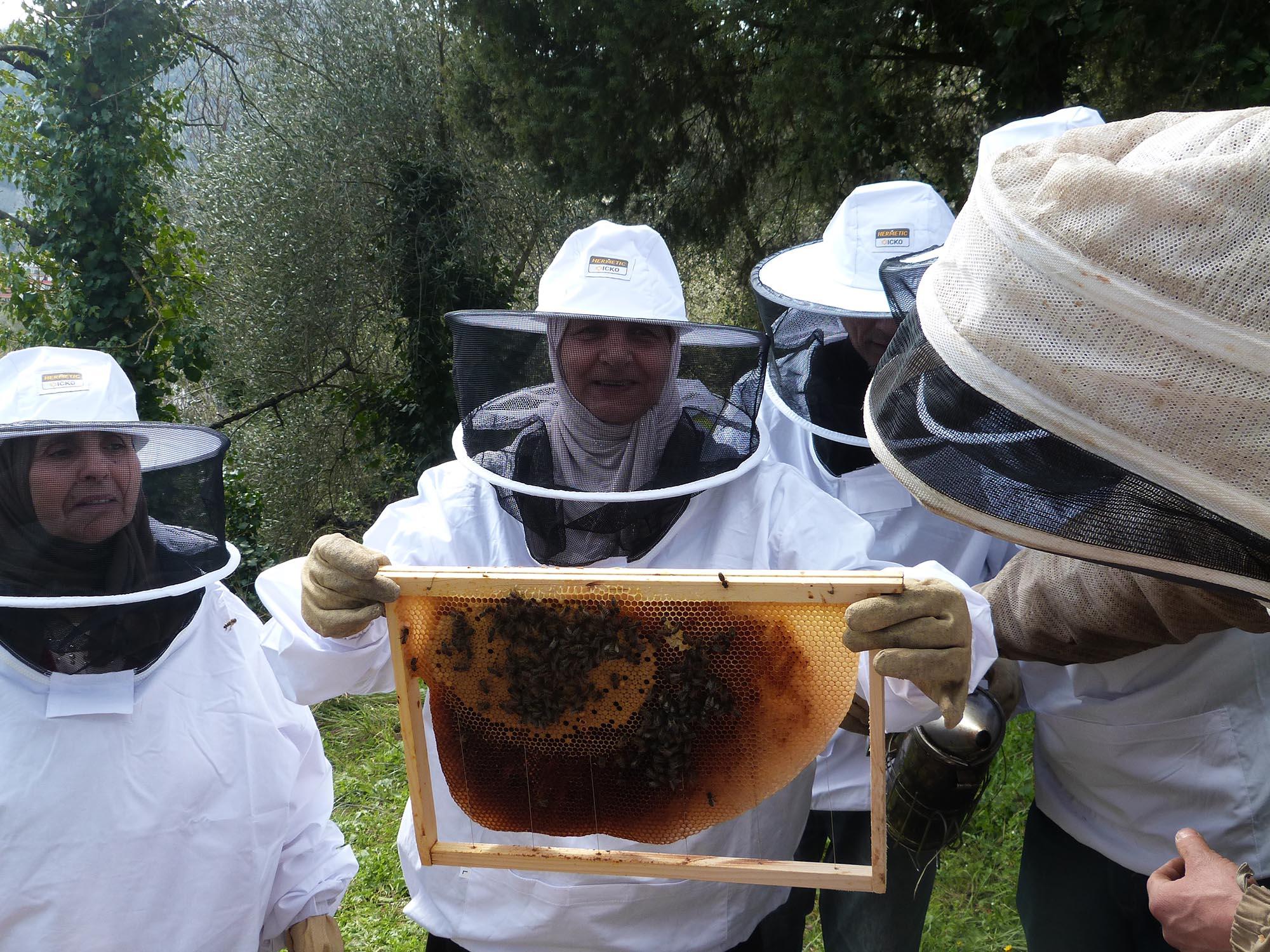 des ruches à l'oasis